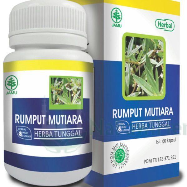 Rumput Mutiara HIU