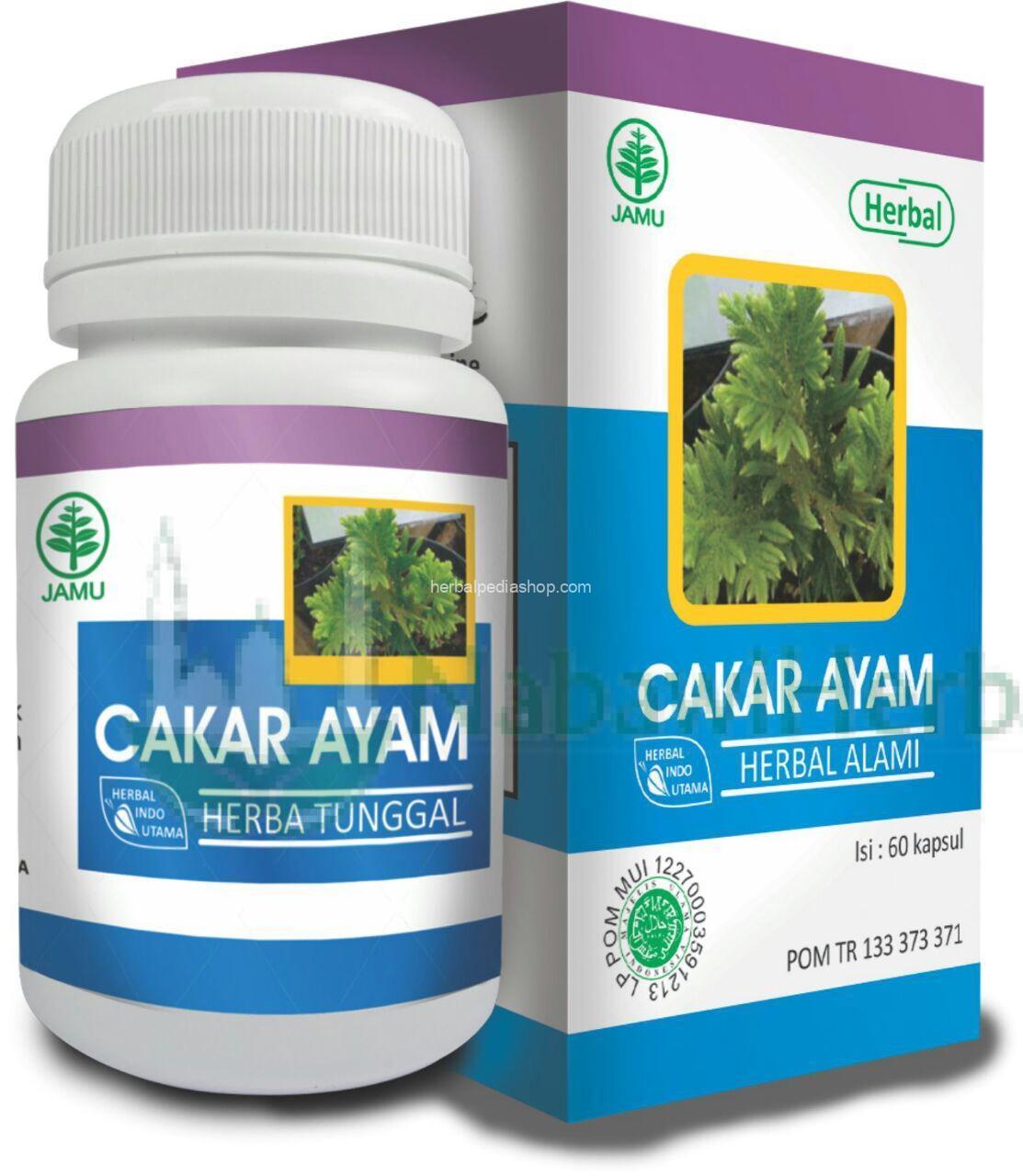 Cakar Ayam Nabawi Herba Distributor Herbal