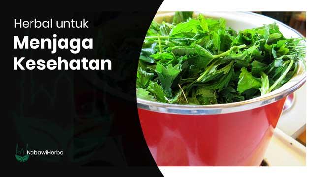 kategori-herbal-untuk-jaga-kesehatan